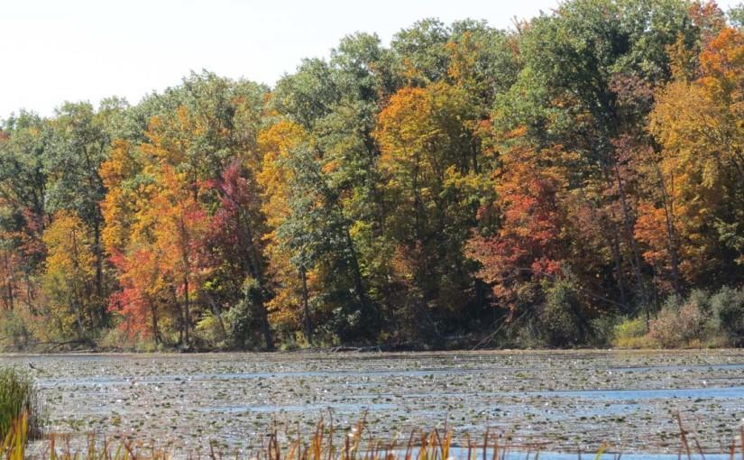 ألوان شجرة الخريف