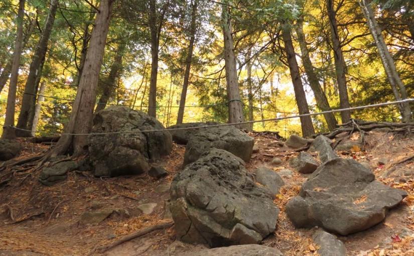 Cedar Forêt