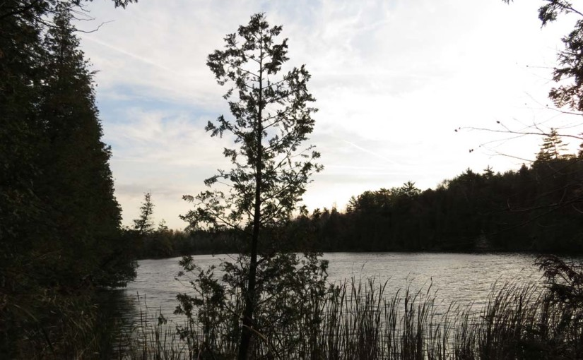 Cedar Tree Lake
