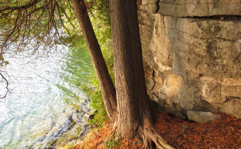 Cedar Tree Pond