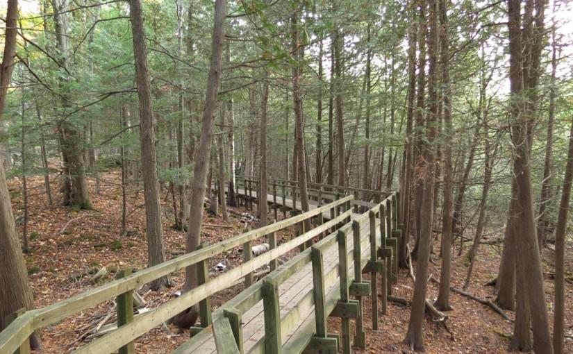 Cedar Tree Trail