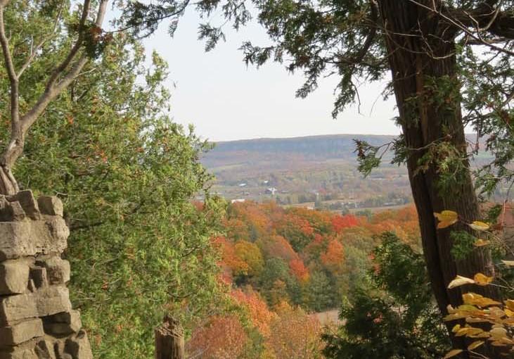 Fall Trees Leter gjennom Cedars