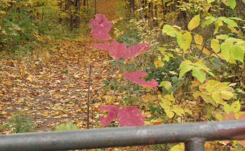 Forest Trail i høst
