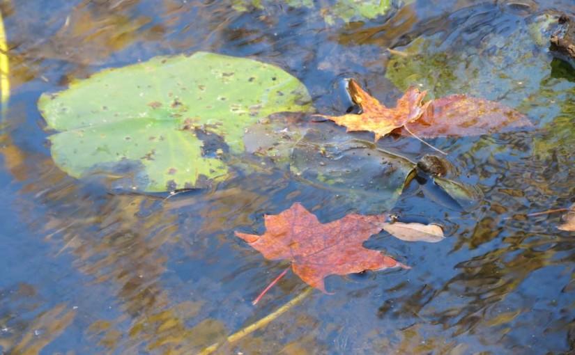 Maple Tree's Leaf