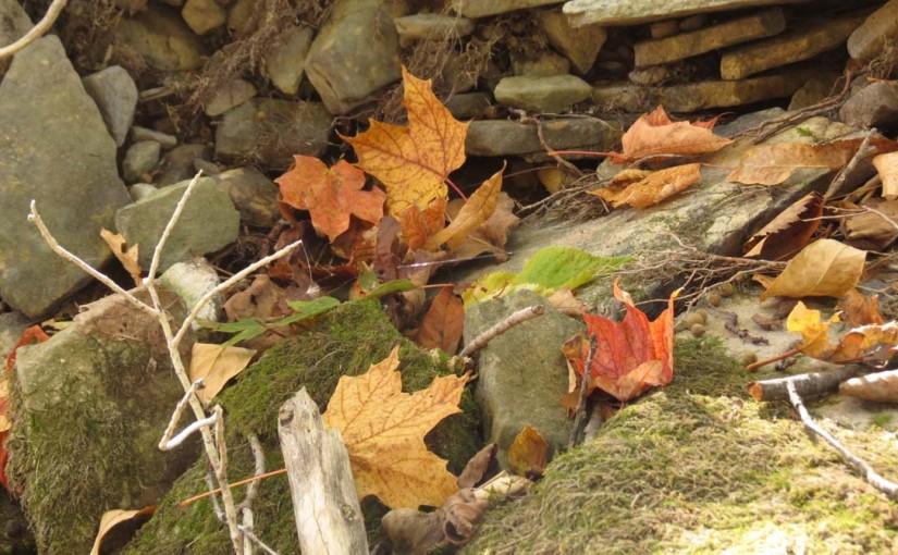 Maple Leaf On Rocks