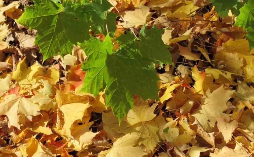 Maple Leaf Grønn