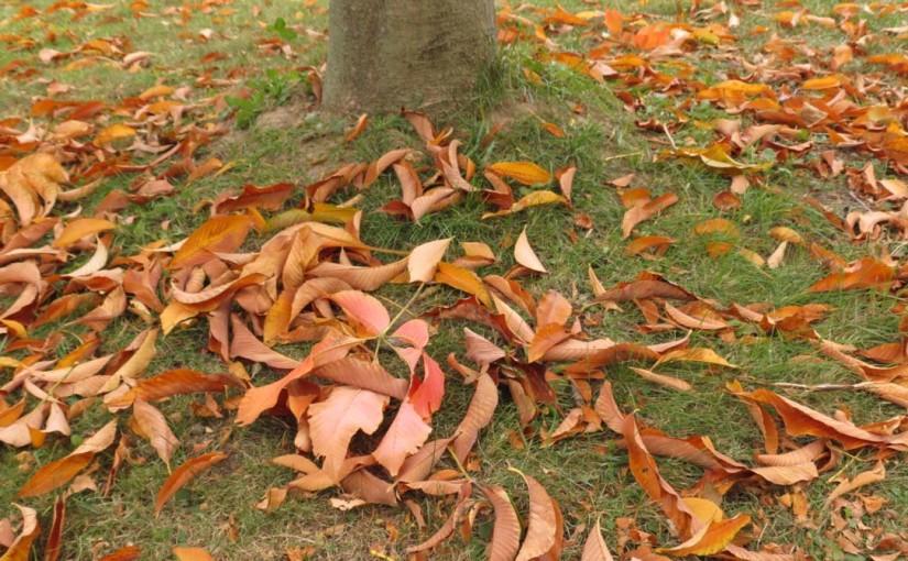 Kastanjetre Fall Leaves