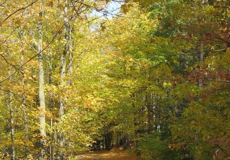 Tre Leaf Trail