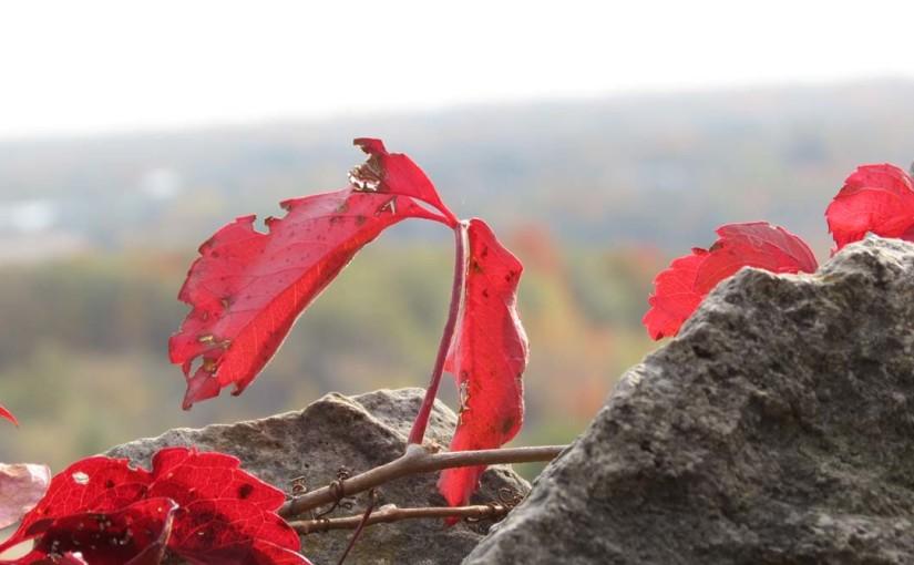 Red Vine Image