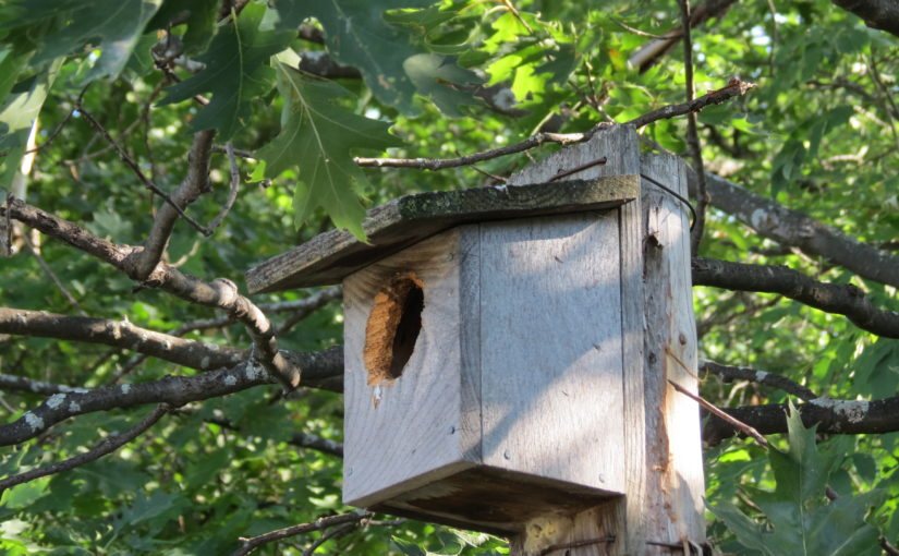 Bois Bird House