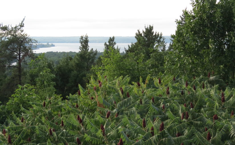 درختان خربزه