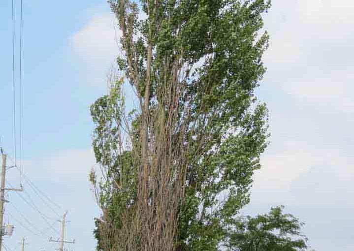 Decaimiento del árbol