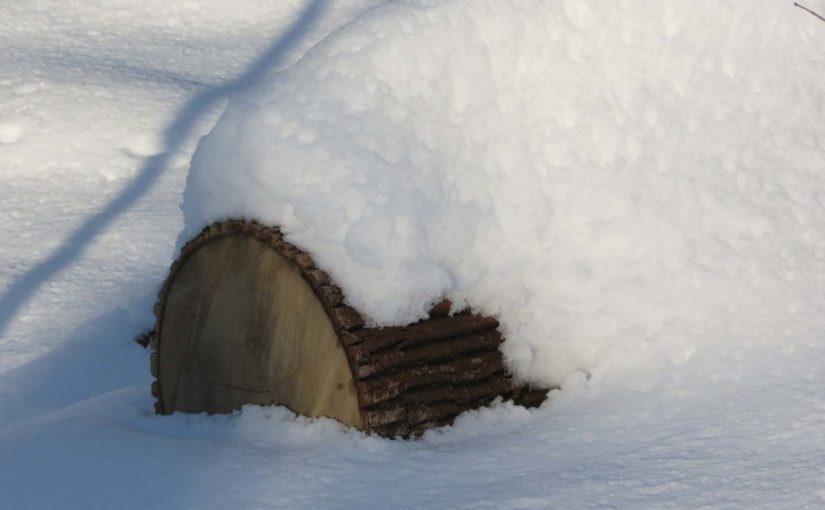 Ash Arbre Connexion hiver