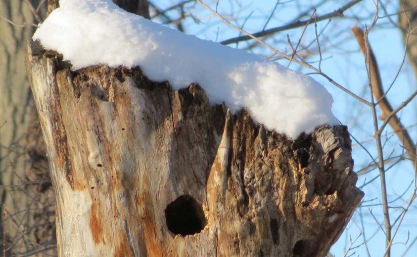 Oiseaux Accueil dans l'arbre d'érable