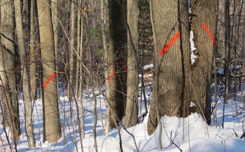 Forest Trees å bli kuttet ned