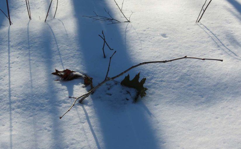 Feuille d'hiver feuille de chêne