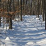 Old Forest Trail i vinter