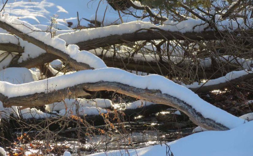 Ramas de árbol cubierto de nieve