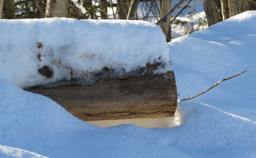 شجرة دخول الشتاء صورة