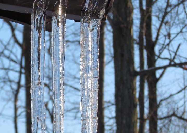 Forest Winter Icicles